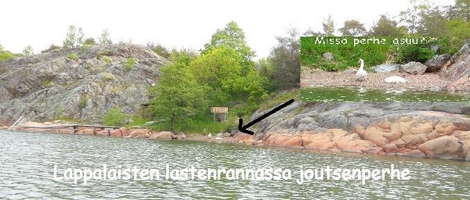Lappalaistenrannanjoutsenet20150610