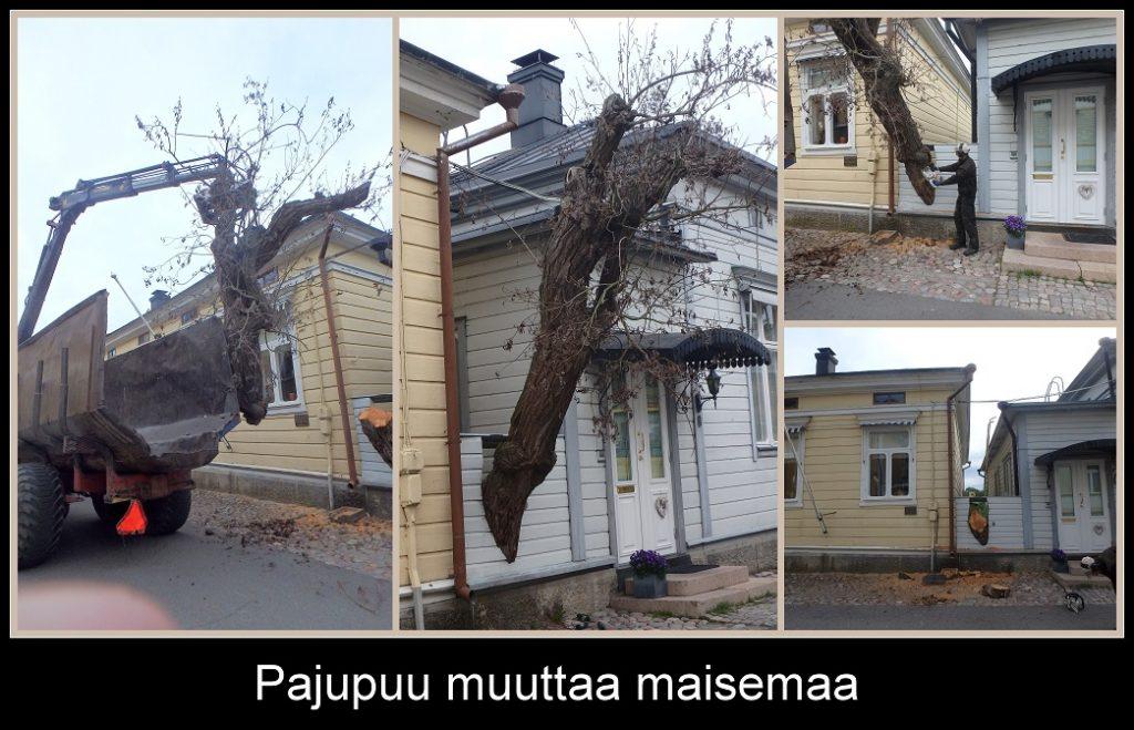 Pajupuu muuttaa maisemaa 20190613