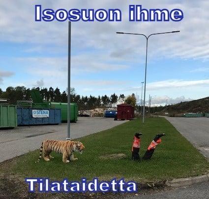 Kaatopaikan tiikeri 20191009